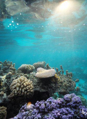 Lagon et plage de sable blanc Tahiti