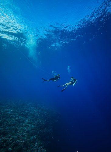 site de plongée en Polynésie