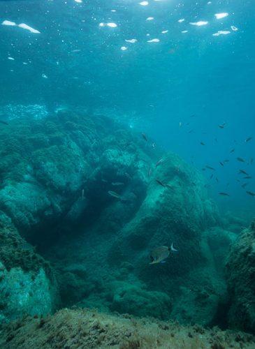 réserve sous-marine Banyuls-sur-Mer