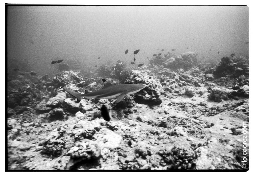 Plonger avec les requins à Tahiti